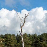Дерево :: Владимир Засимов