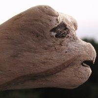 Грустная черепашка. :: игорь кио