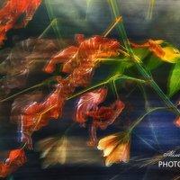 Поэзия осеннего ветра :: Александр Мац