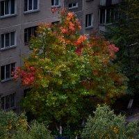 Осень. :: Владимир