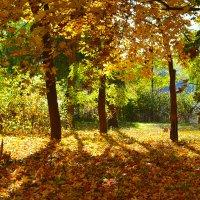 Осенняя палитра парка :: Nina Streapan