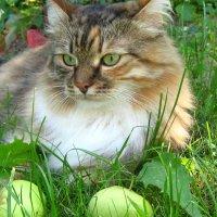 Девочка с яблоками :: Татьяна Трофимова