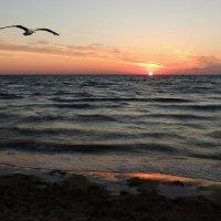 У моря, у синего моря... :: Роман Савоцкий