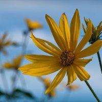 Солнце сентября :: lady v.ekaterina