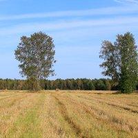 Русское поле :: александр пеньков