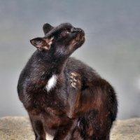 Чёрный кот :: Владимир Анакин