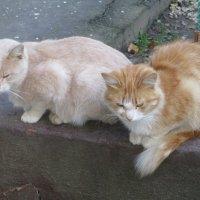Уличные кошки. :: Зинаида