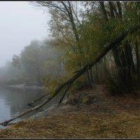 Седой туман сошел на берег. :: Volodymyr Shapoval VIS t