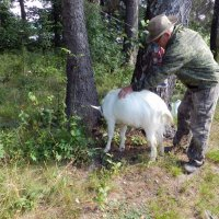 Овца и её хозяин :: Анатолий Кувшинов