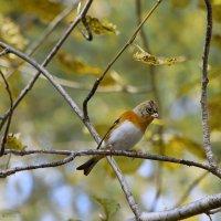 Осень и птицы :: Татьяна Башкирова