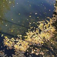 Листва на воде :: Yulia Raspopova