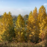 Золотые березки с видом на Сылву в утреннем тумане :: Алексей Сметкин