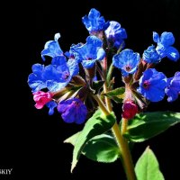 Цветок :: Mikhail Irtyshskiy