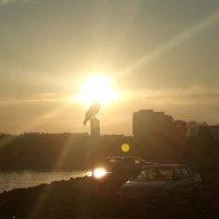 Карное утро :: Giant Tao /