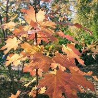 Шорох кленовых листьев :: Yulia Raspopova