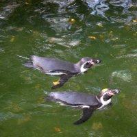 Пингвинята :: anderson2706