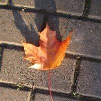 Одинокий листик.. :: Зинаида