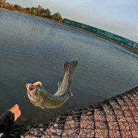 А ещё все три желанья Вам от рыбки золотой! :: Petr Vinogradov