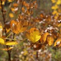 Золотая осень :: Марина Белоусова