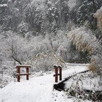 Снегопад в заповеднике Столбы :: Екатерина Торганская