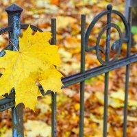 Настроение - осень :: Арина