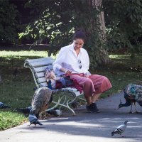 Каждый павлин немного голубь :: Игорь Константинов