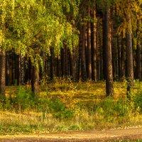 Осенний лес :: Михаил Пименов