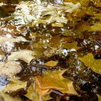 Немного солнца в холодной воде :: Сергей Кузнецов