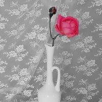 Роза :: Mariya laimite