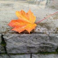 Рыжий лист кленовый... :: Ирина Лесиканич