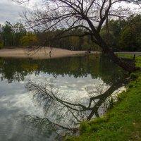 Осень в парке :: Елена