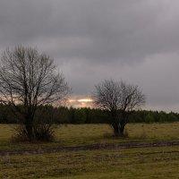 вечер в поле :: Евгений Тарасов
