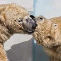 Поцелуй :: SanSan