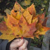 Осенний букетик :: marmorozov Морозова