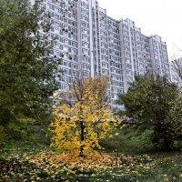 Осень во дворе ... :: Лариса Корж