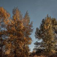 Золотая осень :: Марина