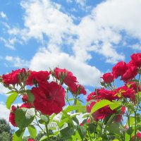 Небо и цветы :: Ольга Елисеева