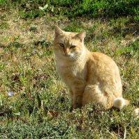 Подарила чуть-чуть теплоты желтоглазая кошка - осень... :: Татьяна Смоляниченко