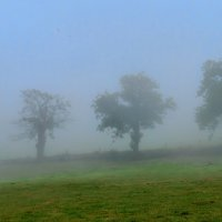 туман по дороге :: Георгий А