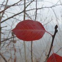 Осенний поцелуй :: Яковлев Виктор