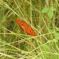 Бабочки 3 :: Дмитрий