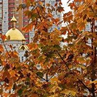 Клёны выкрасили город колдовским,каким-то,цветом... :: Petr Vinogradov