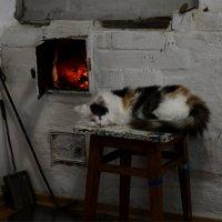 Спит, свернувшись кот у печки... :: Лиана Краснопольская .