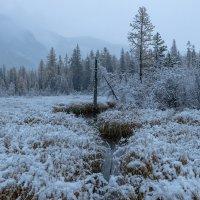 По первом снегу. :: Марина Фомина.