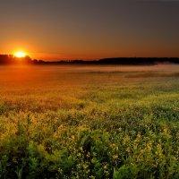И солнца мед разлился по туманам... :: Дмитрий Блинков