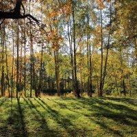 Осень в Сестрорецке :: Михаил Бояркин