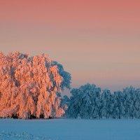 Морозное утро II :: Владимир Сковородников