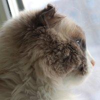 А как там, за окном?! :: Валя Барменкова