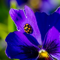 Последние краски лета :: Жанна Мальцева