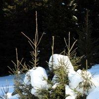 под снежным одеялом :: Ольга Шишкина